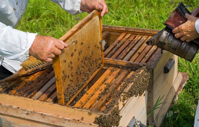 bičių avilys
